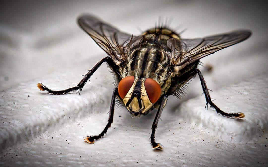 Deze slimme camera telt en herkent insecten