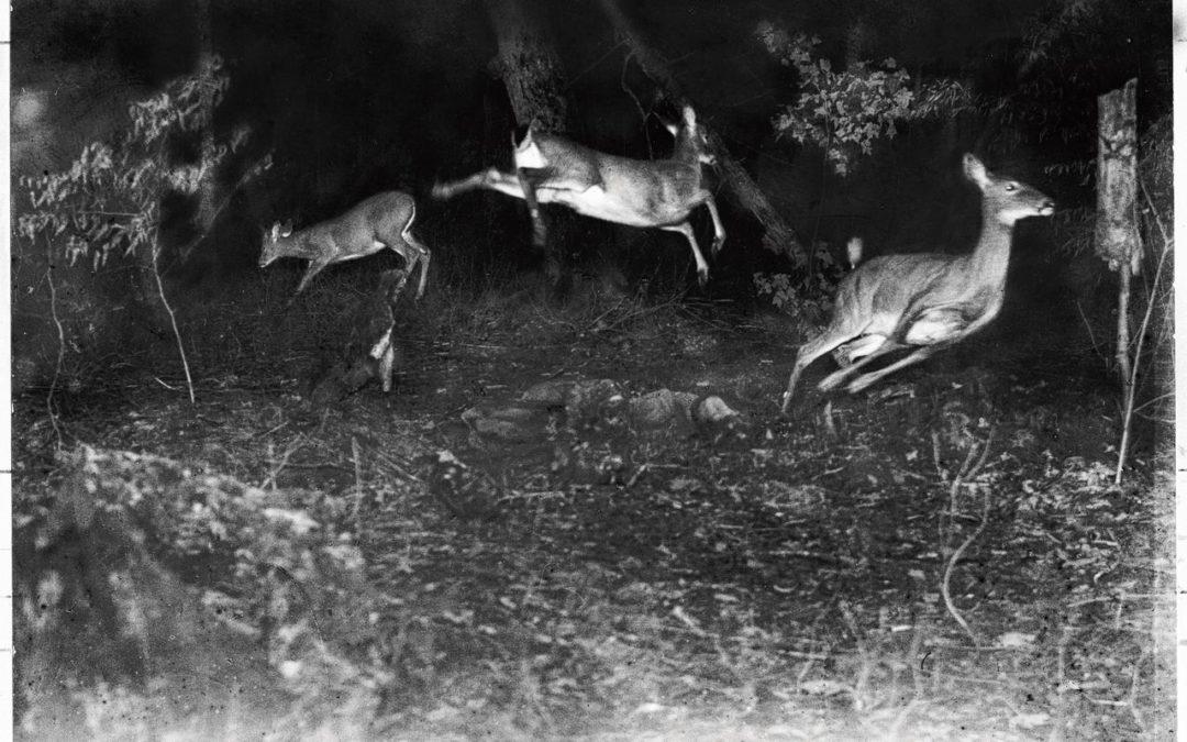 Gesnapt! Intelligente camera's leren welke dieren voorbijlopen