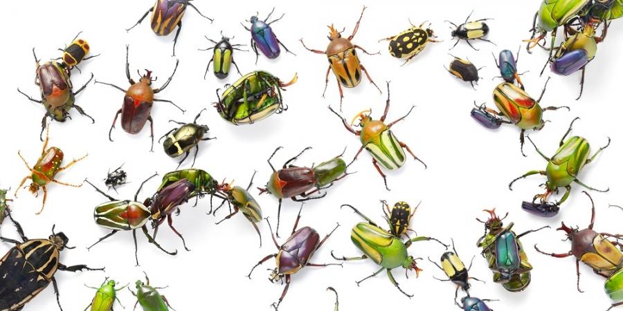 Naturalis ontwikkelt automatische camera om insecten te tellen en te herkennen